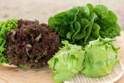 野菜052.jpg
