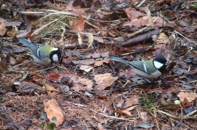 八ヶ岳 野鳥