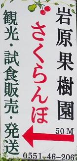 ①さくらんぼ看板02.jpg