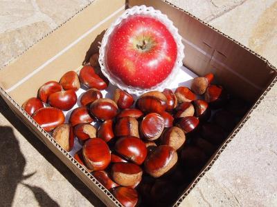 栗とりんご.jpg
